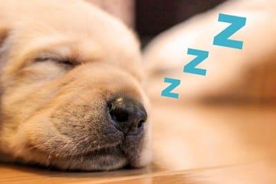 睡眠中の犬